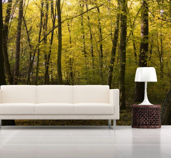 Wallpaper Wall Mural Nature Category Maple Forest Per Square