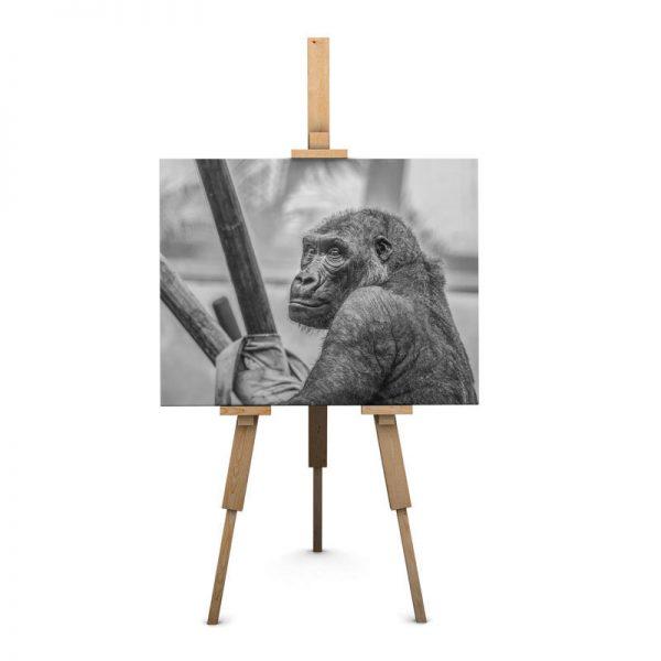 frame_canvas_animal9