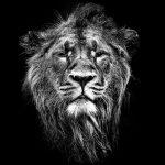 animal_patterns32